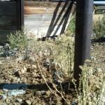 EDRR Weeds